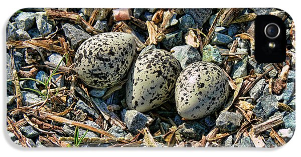 Killdeer Bird Eggs IPhone 5 / 5s Case by Jennie Marie Schell