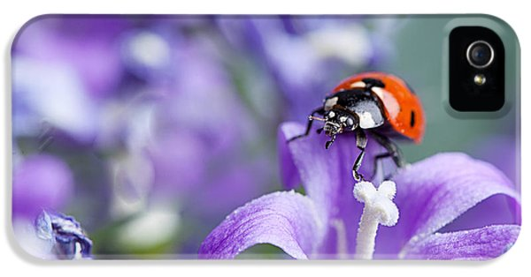 Ladybug And Bellflowers IPhone 5 / 5s Case by Nailia Schwarz