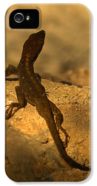Leapin' Lizards IPhone 5 / 5s Case by Trish Tritz
