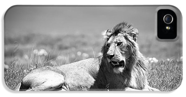 Landscape iPhone 5 Cases - Lion King in Black and White iPhone 5 Case by Sebastian Musial