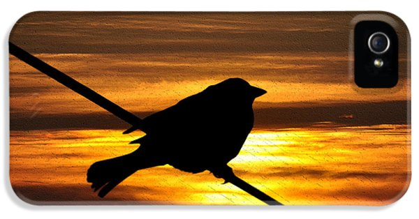 Sillouette iPhone 5 Cases - Little Sparrow iPhone 5 Case by Bill Cannon