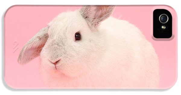 Young Rabbit iPhone 5 Cases - Lop Rabbit iPhone 5 Case by Mark Taylor