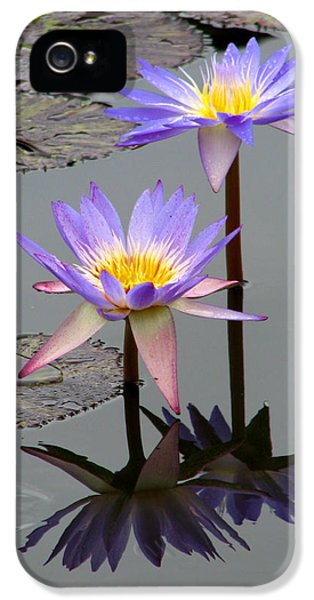 Florals iPhone 5 Cases - Lotus Reflection 4 iPhone 5 Case by David Dunham