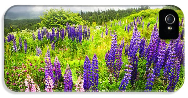 Newfoundland iPhone 5 Cases - Lupin flowers in Newfoundland iPhone 5 Case by Elena Elisseeva