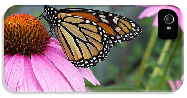 Cone Flowers And Butterflies iPhone 5 Cases - Monarch Butterfly Drinking Nectar iPhone 5 Case by Corinne Elizabeth Cowherd