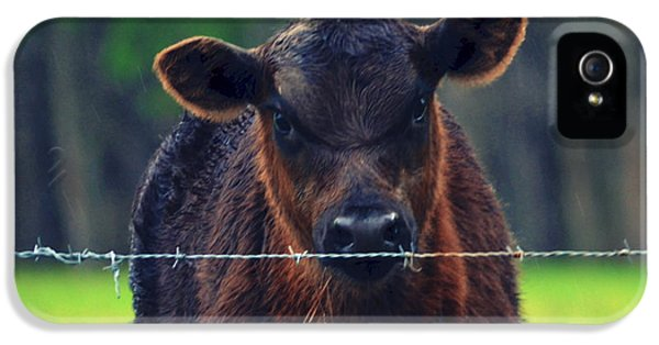 Scowl iPhone 5 Cases - Moo Cow II iPhone 5 Case by Robin Dickinson