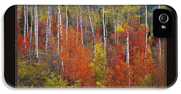 Caribous iPhone 5 Cases - Mountain of Color iPhone 5 Case by Leland D Howard