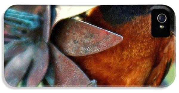 Bird Watcher iPhone 5 Cases - My Orange Taniger iPhone 5 Case by Karen Wiles
