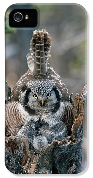 Northern Hawk Owl Surnia Ulula Parent IPhone 5 / 5s Case by Michael Quinton