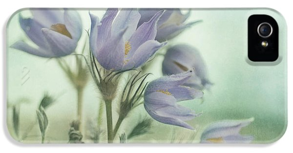 Common Pasque Flower iPhone 5 Cases - On The Crocus Bluff iPhone 5 Case by Priska Wettstein