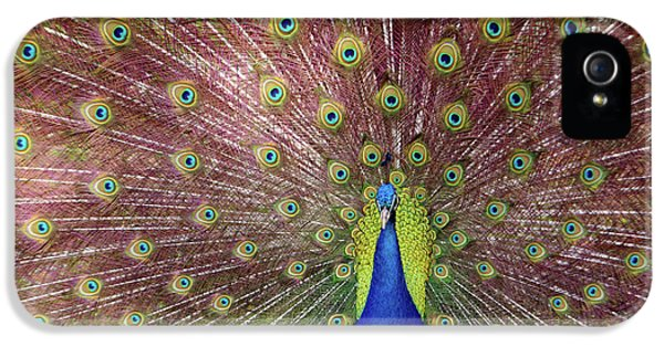 Proud iPhone 5 Cases - Peacock iPhone 5 Case by Carlos Caetano