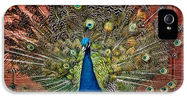 Bird Watcher iPhone 5 Cases - Peacock tails iPhone 5 Case by Paul Ward