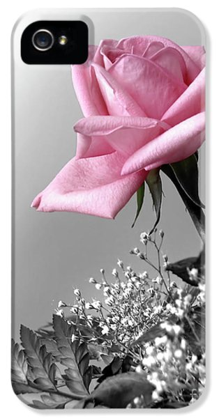 Anniversary iPhone 5 Cases - Pink Petals iPhone 5 Case by Carlos Caetano