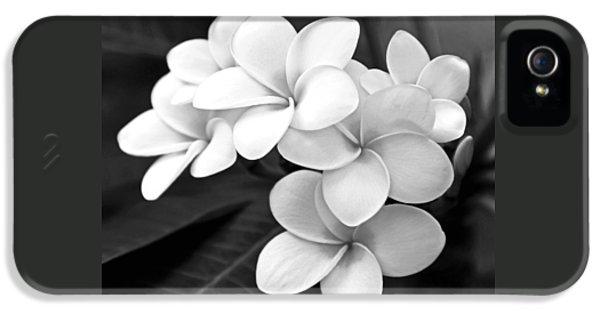 Plumerias iPhone 5 Cases - Plumeria - Black and White iPhone 5 Case by Kerri Ligatich