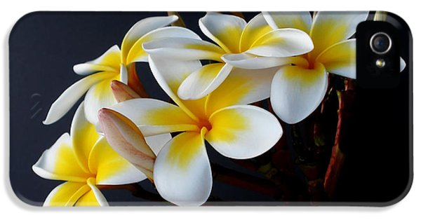 Yellow And White Plumeria Flower Frangipani iPhone 5 Cases - Plumeria Bouquet iPhone 5 Case by Kaye Menner