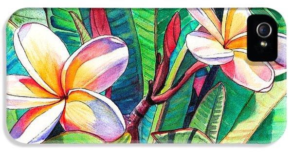Plumerias iPhone 5 Cases - Plumeria Garden iPhone 5 Case by Marionette Taboniar
