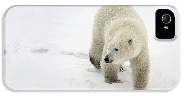 Wild iPhone 5 Cases - Polar Bear Walking iPhone 5 Case by Richard Wear