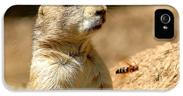 Prarie Dog Bee Alert IPhone 5 / 5s Case by LeeAnn McLaneGoetz McLaneGoetzStudioLLCcom