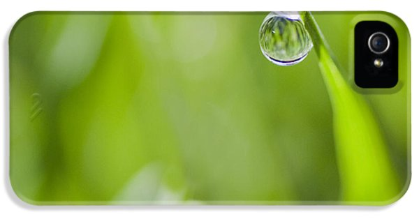 Water Drop iPhone 5 Cases - Precise iPhone 5 Case by Rebecca Cozart