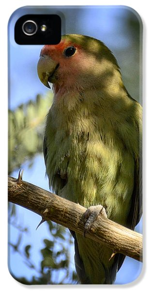 Pretty Bird IPhone 5 / 5s Case by Saija  Lehtonen