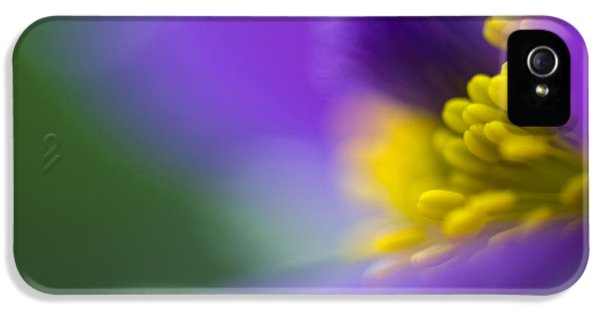 Close Up iPhone 5 Cases - Pulsatilla iPhone 5 Case by Silke Magino