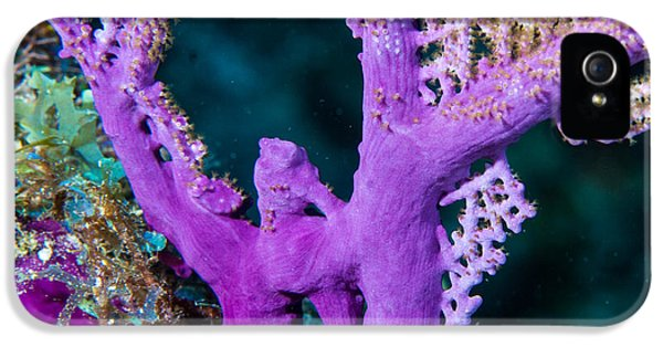Polyp iPhone 5 Cases - Purple Coral iPhone 5 Case by Jean Noren