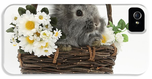 Young Rabbit iPhone 5 Cases - Rabbit In A Basket With Flowers iPhone 5 Case by Mark Taylor