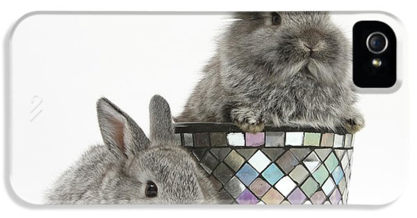 Young Rabbit iPhone 5 Cases - Rabbits And Decorative Flowerpot iPhone 5 Case by Mark Taylor
