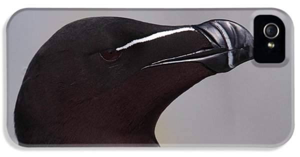 Razorbill Portrait IPhone 5 / 5s Case by Bruce J Robinson