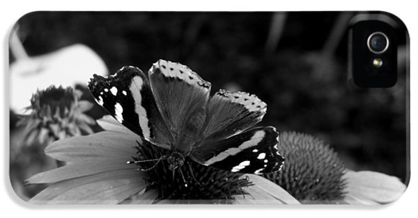 Cone Flowers And Butterflies iPhone 5 Cases - Red Admiral Butterfly iPhone 5 Case by Corinne Elizabeth Cowherd