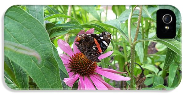 Cone Flowers And Butterflies iPhone 5 Cases - Red Admiral Butterfly Drinking from Cone Flower iPhone 5 Case by Corinne Elizabeth Cowherd