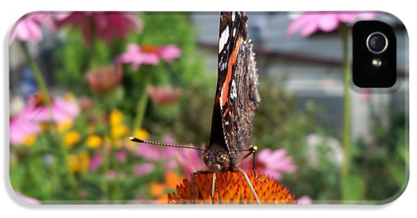 Cone Flowers And Butterflies iPhone 5 Cases - Red Admiral Butterfly Drinking Nectar - Front iPhone 5 Case by Corinne Elizabeth Cowherd
