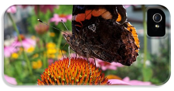 Cone Flowers And Butterflies iPhone 5 Cases - Red Admiral Butterfly Drinking Nectar - Side iPhone 5 Case by Corinne Elizabeth Cowherd