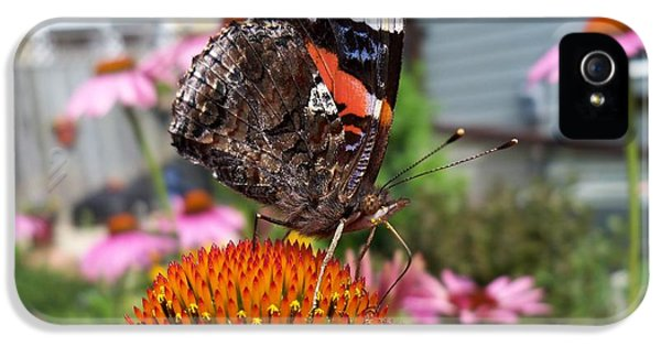Cone Flowers And Butterflies iPhone 5 Cases - Red Admiral Butterfly Drinking Nectar iPhone 5 Case by Corinne Elizabeth Cowherd