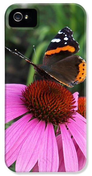Cone Flowers And Butterflies iPhone 5 Cases - Red Admiral Butterfly Loving Some Nectar iPhone 5 Case by Corinne Elizabeth Cowherd