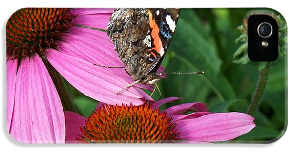 Cone Flowers And Butterflies iPhone 5 Cases - Red Admiral Butterfly Reaching for a Drink iPhone 5 Case by Corinne Elizabeth Cowherd