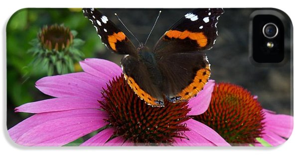 Cone Flowers And Butterflies iPhone 5 Cases - Red Admiral Butterfly Sitting Pretty iPhone 5 Case by Corinne Elizabeth Cowherd