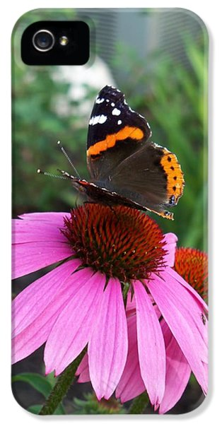 Cone Flowers And Butterflies iPhone 5 Cases - Red Admiral Butterfly Taking a Sip of Nectar iPhone 5 Case by Corinne Elizabeth Cowherd