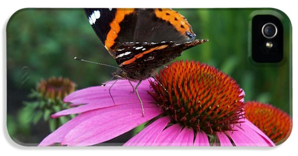 Cone Flowers And Butterflies iPhone 5 Cases - Red Admiral Butterfly Taking a Walk iPhone 5 Case by Corinne Elizabeth Cowherd
