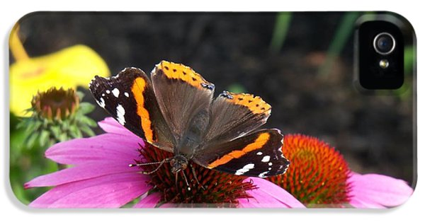 Cone Flowers And Butterflies iPhone 5 Cases - Red Admiral Butterfly with Wings Open iPhone 5 Case by Corinne Elizabeth Cowherd