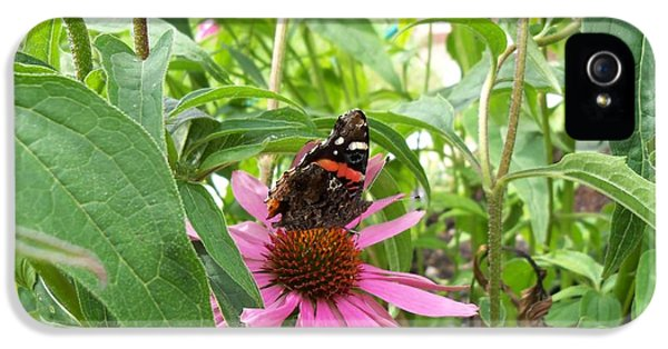 Cone Flowers And Butterflies iPhone 5 Cases - Red Admiral on Cone Flower iPhone 5 Case by Corinne Elizabeth Cowherd