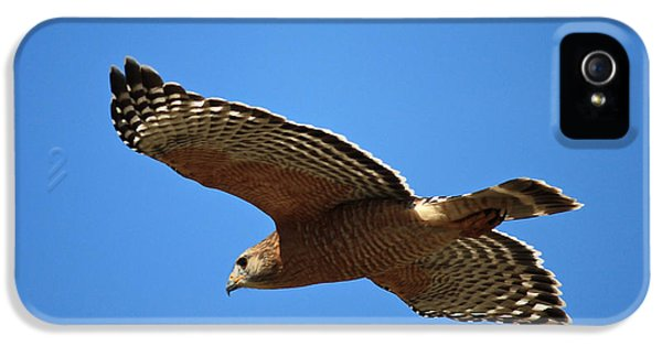 Hawk iPhone 5 Cases - Red Shouldered Hawk in Flight iPhone 5 Case by Carol Groenen
