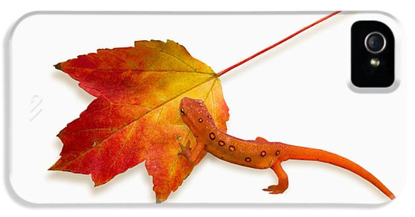 Red Spotted Newt IPhone 5 / 5s Case by Ron Jones