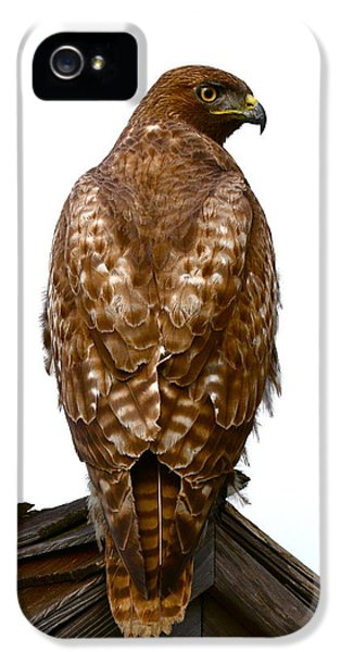 Red Tailed Hawk iPhone 5 Cases - Red Tail Hawk iPhone 5 Case by Paul Marto