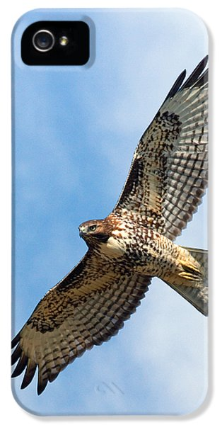 Red Tailed Hawk iPhone 5 Cases - Red Tail Hawk iPhone 5 Case by Randall Ingalls