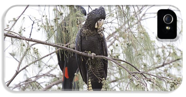 Red Tailed Black Cockatoos IPhone 5 / 5s Case by Douglas Barnard