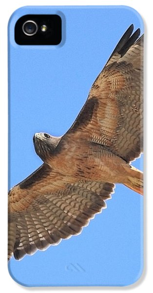 Red Tailed Hawk iPhone 5 Cases - Red Tailed Hawk in flight iPhone 5 Case by Wingsdomain Art and Photography