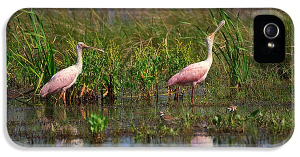 Roseate Spoonbills IPhone 5 / 5s Case by Louise Heusinkveld