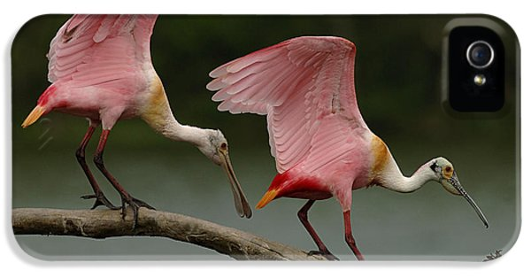 Rosiette Spoonbills IPhone 5 / 5s Case by Bob Christopher