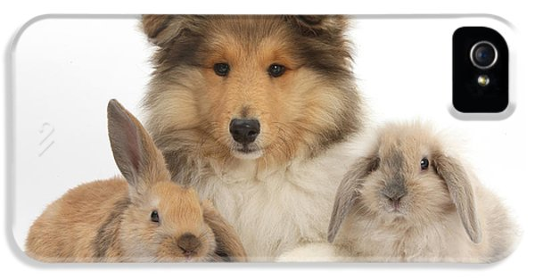 Young Rabbit iPhone 5 Cases - Rough Collie Pup With Two Young Rabbits iPhone 5 Case by Mark Taylor